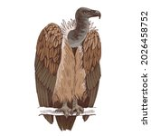 griffon vulture on a white...   Shutterstock .eps vector #2026458752