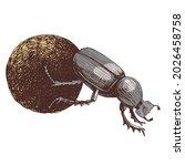 african dung beetle rolling ball   Shutterstock .eps vector #2026458758