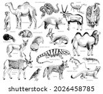 monochrome hand drawn...   Shutterstock .eps vector #2026458785