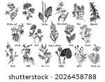 hand drawn monochrome set of...   Shutterstock .eps vector #2026458788