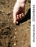 sowing seeds into soil | Shutterstock . vector #202648666