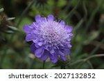 Butterfly Flower Purple...
