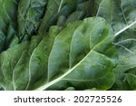 Chard Leaves Background