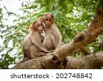 Two Young Monkeys Sitting On A...