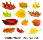 Isolated Leaves. Various Autumn ...