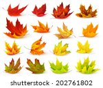 isolated leaf collection.... | Shutterstock . vector #202761802