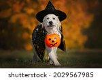 dog in halloween costume...