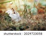 The Ant Climbed On The Mushroom ...