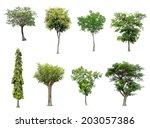 collection of tree isolated on... | Shutterstock . vector #203057386