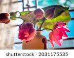 Natural Pink Lotus In Vietnam ...