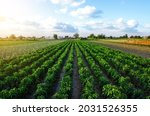 A Farm Field Planted With...