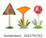 Mushroom And Toadstool....