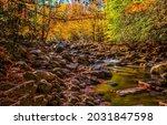 Forest Stream In Autumn...