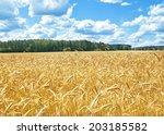 Landscape With Grain Field