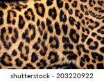 Leopard Skin Texture For...