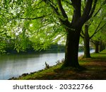 row of trees by the river