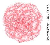 Beautiful Pink Carnation...