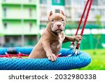 A Cute Puppy Sits On A Swing In ...