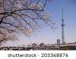 Tokyo Sky Tree and cherry Asakusa Sumida Park.