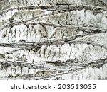 Palm Stem Bark Background Close ...