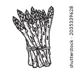 hand drawn asparagus... | Shutterstock .eps vector #2035339628