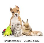 Stock photo group of pets together in front isolated on white background 203535532