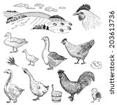 poultry yard. hand drawing set... | Shutterstock .eps vector #203613736