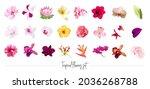 exotic tropical flowers big... | Shutterstock .eps vector #2036268788