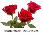 Three Red Roses Isolated On...