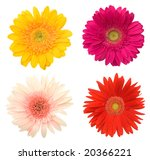 lots of beautiful colorful... | Shutterstock . vector #20366221