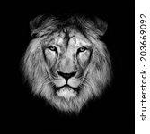 beautiful lion on a black... | Shutterstock . vector #203669092