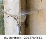Closeup Of Old Cobwebs In A...