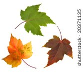 natures recycle | Shutterstock . vector #20371135
