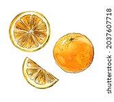 orange citrus fruit drawing... | Shutterstock . vector #2037607718