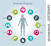 Medical Human Organs Icon Set...