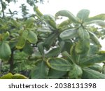 blurred view of many leaf ... | Shutterstock . vector #2038131398