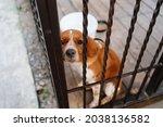 A Sad Dog Behind The Metal Bars ...