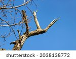 Close Up Of Dried Tree Branches ...