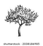 blooming cherry tree. ink... | Shutterstock .eps vector #2038186985