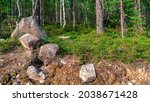 Photo Scenic Forest Landscape...