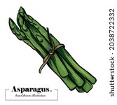 isolated bunch of asparagus... | Shutterstock .eps vector #2038722332