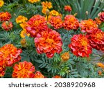 Background Of Beautiful Flowers ...
