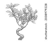 highly detailed drawing of tree ... | Shutterstock .eps vector #2038979228