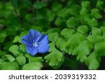 Beautiful Blooming Blue Ground...