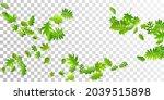 bush leaves delicate vector...   Shutterstock .eps vector #2039515898