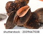 Australian Banksia Seed And...