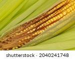 Corn Kernels On Ear With Silk....