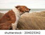 Red Dog On A Windy Hillside