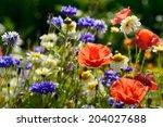 An Abundance Of Wild Flowers In ...