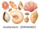 set of shell watercolor hand...   Shutterstock . vector #2040464822